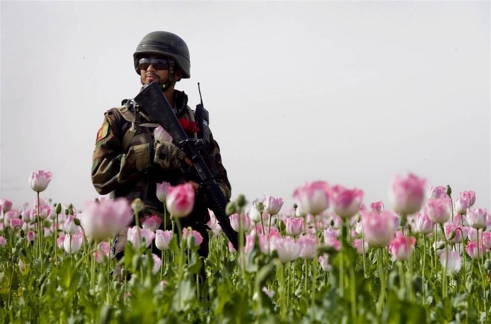 Afganistanilainen poliisipartio valvoo unikkopelloilla. Kuva: Kate Holt/IRIN